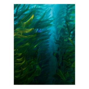 Finding Dory | Hide and Seek - Sea Kelp Postcard