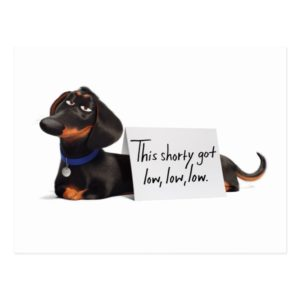 Secret Life of Pets | Buddy - Low, Low, Low Postcard