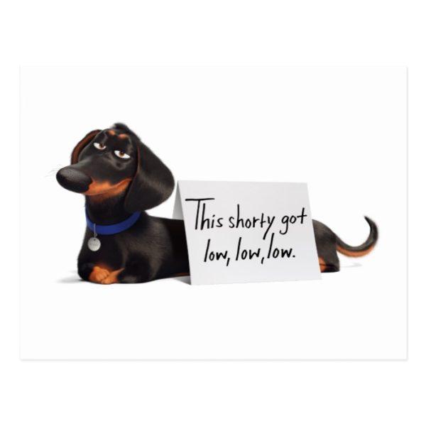 Secret Life of Pets   Buddy - Low, Low, Low Postcard