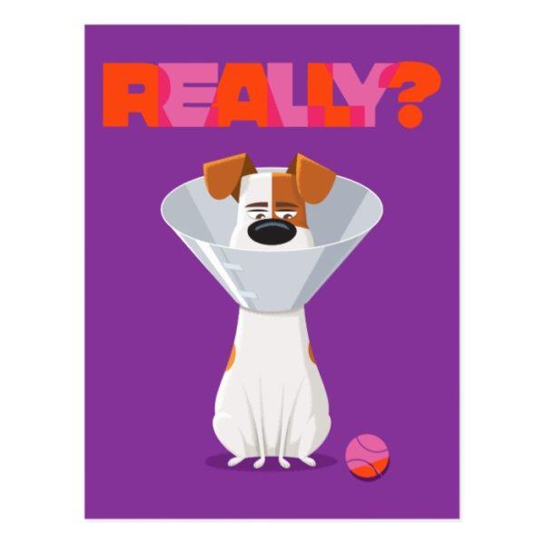 Secret Life of Pets - Max | Really? Postcard